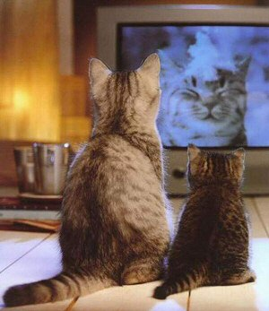 nonton funniest animal video
