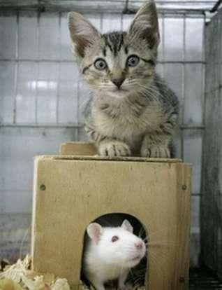 tikus & kucing