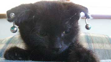 gothic-kitten