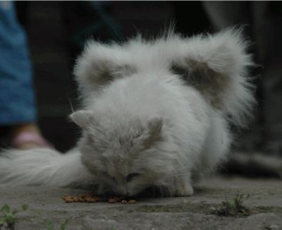 kucing bersayap di china (lagi)