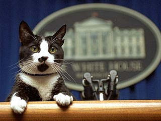 Socks, Mantan First Cat Amerika Serikat (AS)