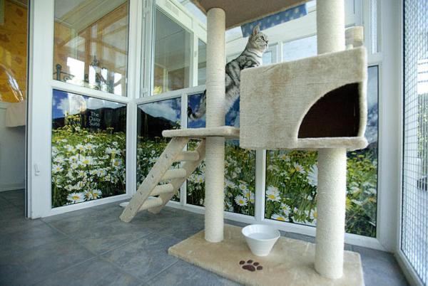 Hotel Mewah Khusus Kucing