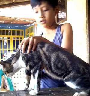 kucing berlafaz Allah