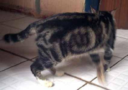 http://www.kucingkita.com/images/articles/news/2010/lafaz3.jpg