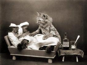 sakit gigi kucing