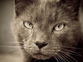 umur kucing dibanding manusia