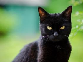 mitos kucing, kepercayaan dan takhayul kucing dari dalam dan luar negeri