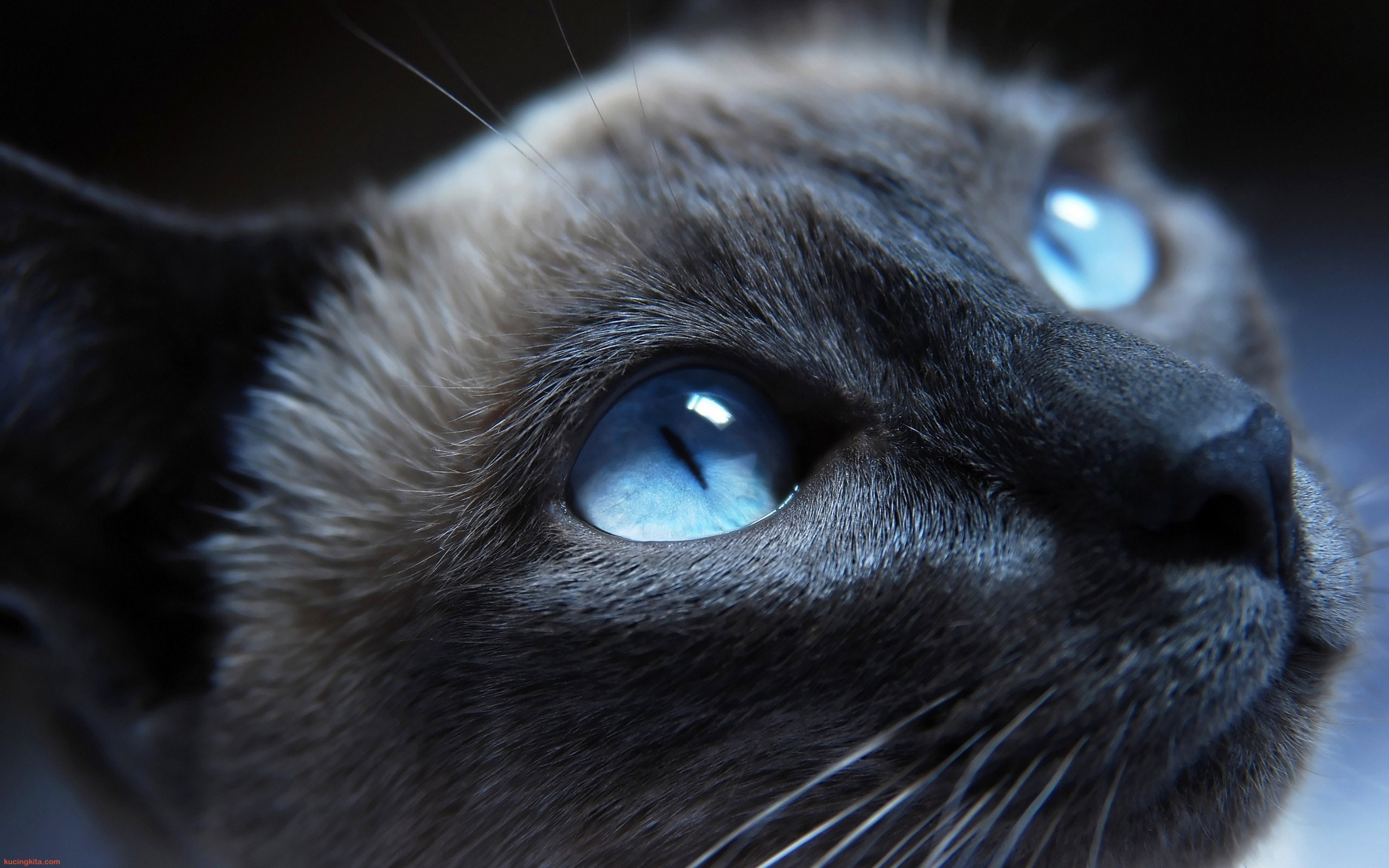 Image result for kucing wallpaper