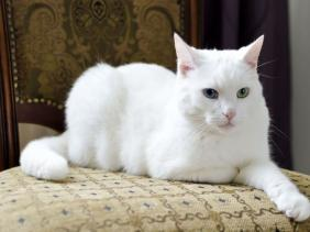 Warna & pola warna kucing: Solid | KucingKita.com