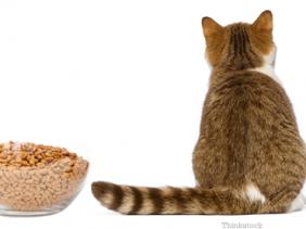 Mengatasi Kucing Tidak Mau Makan Kucingkita Com